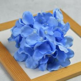 Гортензия голубая 14 см