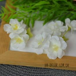 Цветок вишни двойной белый