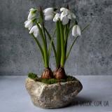 Цветы и зелень в кашпо