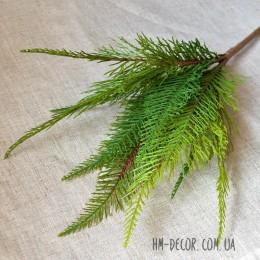 Туя японская зеленая премиум 40 см