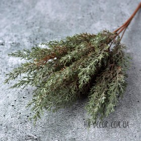 Можжевельник темно-зеленый 35 см