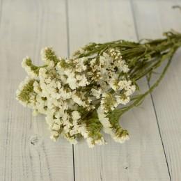Кермек сухоцвет белый букет