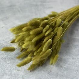 Лагурус сухоцвет хаки 10 шт. 40 см
