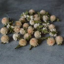 Сухоцвет гомфрена кремовая 1-1,5 см 30 шт.