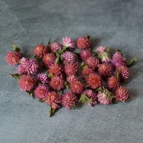 Сухоцвет гомфрена розовая 1-1,5 см 30 шт.