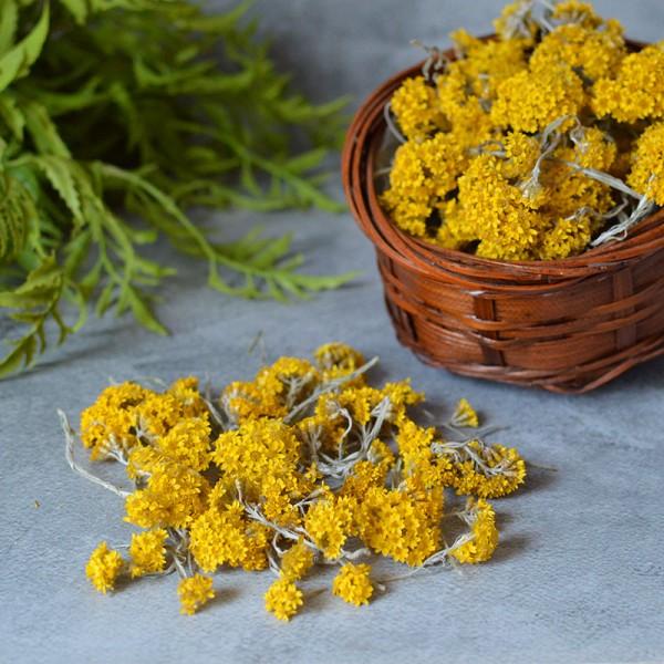 Сухоцвет гелиптерум желтый