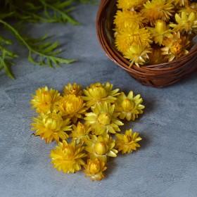 Сухоцвет Гелихризум ярко-желтый 12 шт.