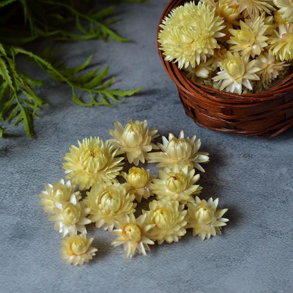 Сухоцвет Гелихризум светло-желтый 12 шт.