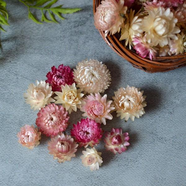 Сухоцвет Гелихризум светло-розовый 12 шт.