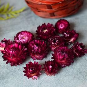 Сухоцвет Гелихризум бордовый 12 шт.