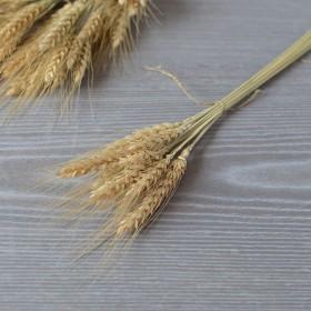 Пшеница натуральная неокрашенная 10 шт.
