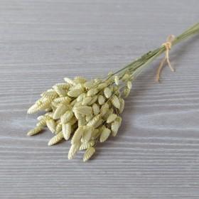 Бриза сухоцвет натуральный неокрашенный 15 шт.