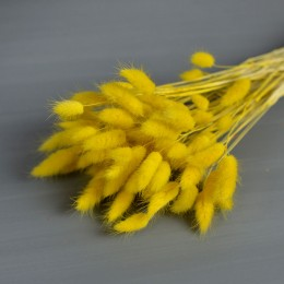 Лагурус ярко-желтый 10 шт. 25 см