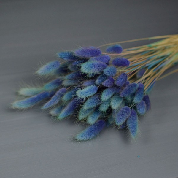 Лагурус бирюзово-синий 10 шт. 25 см