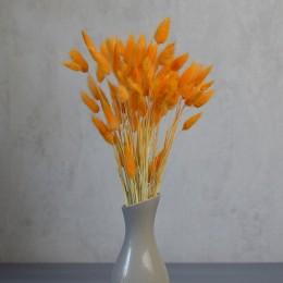 Лагурус оранжевый 10 шт. 25 см