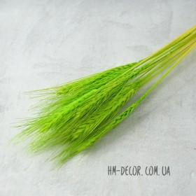 Пшеница натуральная салатовая 10 шт.