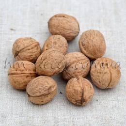 Орех грецкий натуральный 10 шт.