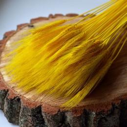 Пшеница натуральная желтая 10 шт.