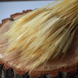 Пшеница натуральная отбеленная 10 шт.