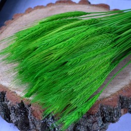 Пшеница натуральная зеленая 10 шт.