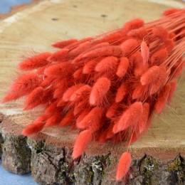 Лагурус сухоцвет апельсиновый 10 шт. 40 см