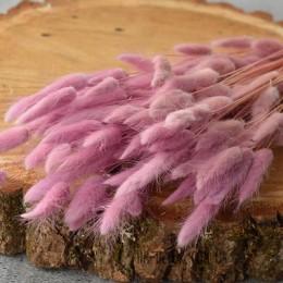 Лагурус сухоцвет нежно-сиреневый 10 шт. 40 см