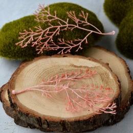 Аспарагус персиковый веточка 12 см