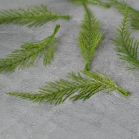 Веточка туи плоская зеленая 14 см 1 шт.