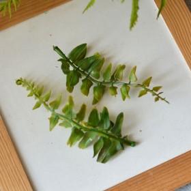 Лист папоротника зеленый 12 см 1 шт.