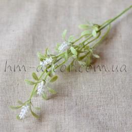 Шалфей белый с напылением 30 см