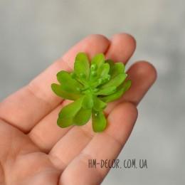 Суккулент мини 006 зеленый 3,5 см 1 шт.