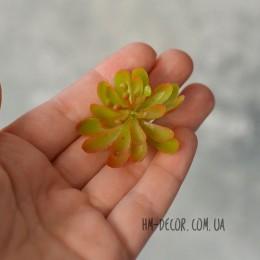 Суккулент мини 006 зеленый-оранжевый 3,5 см 1 шт.