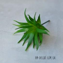 Суккулент Гастерия 002 зеленая 7 см