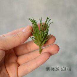 Суккулент мини 004 зеленый 3,5 см 1 шт.