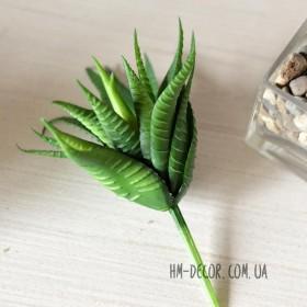Суккулент Гастерия зеленая латекс 9 см