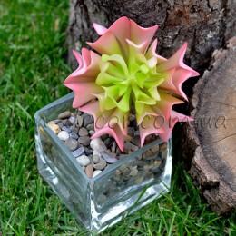 Эхеверия 816 розовая 10*6 см