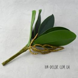 Лист орхидеи с корнем 20 см