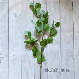 Эвкалипт высокий светло-зеленый 90 см