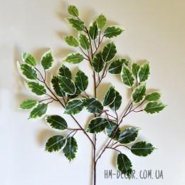 Фикус бенджамин зеленый с белым 60 см