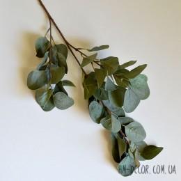 Эвкалипт Populus зеленый 70 см