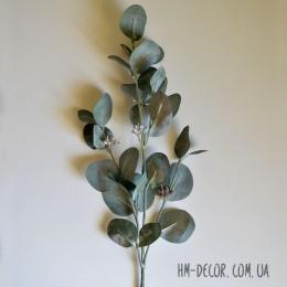 Эвкалипт Populus мятно-зеленый с ягодами 75 см