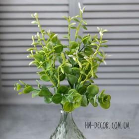 Эвкалипт зеленый с длинными белыми соцветиями 5 веток 30 см