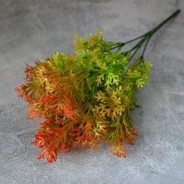 Туя зелено-оранжевая куст 5 веток 30 см