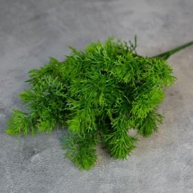 Туя зеленая куст 5 веток 30 см