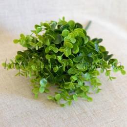 Эвкалипт зеленый пышный 30 см