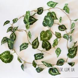 Лиана с листьями сингониума 2,4 м