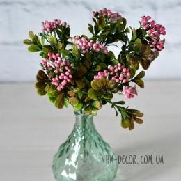 Самшит с розовыми ягодами 30 см