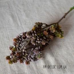 Ветка с мелкими листиками-суккулентами бордо 50 см