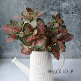 Фиттония зеленая с розовыми прожилками 30 см
