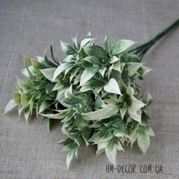 Рускус бело-зеленый с острыми листиками и напылением 30 см